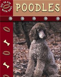 Eye To Eye With Dogs: Poodles