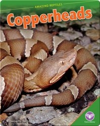 Amazing Reptiles: Copperheads