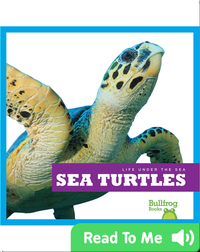 Life Under The Sea: Sea Turtles