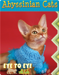 Eye To Eye With Cats: Abyssinian Cats