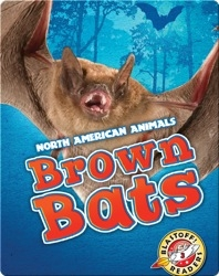 North American Animals: Brown Bats