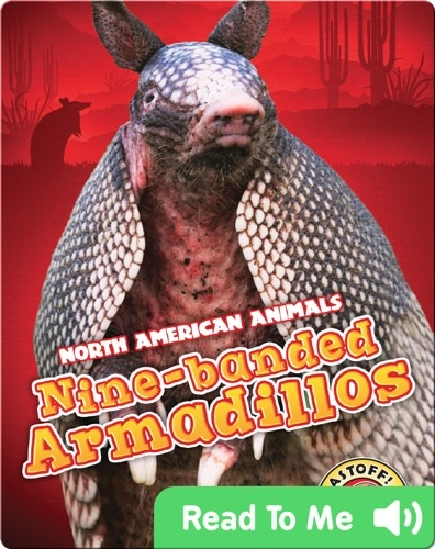 North American Animals: Nine-Banded Armadillos