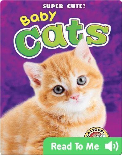 Super Cute! Baby Cats