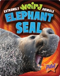 Extremely Weird Animals: Elephant Seal