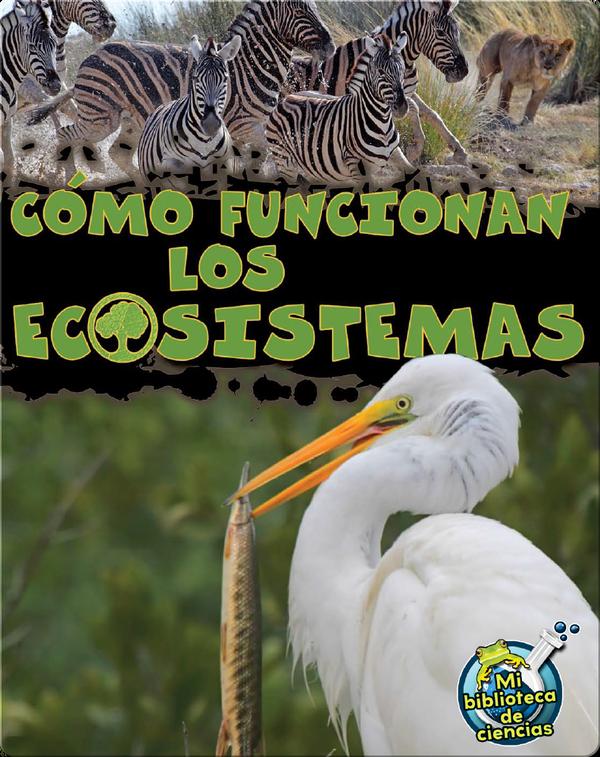 Cómo Funcionan Los Ecosistemas