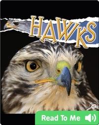 Raptors: Hawks