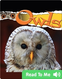 Raptors: Owls
