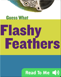 Flashy Feathers