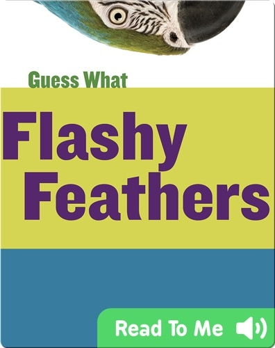 Flashy Feathers