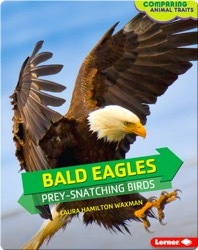 Bald Eagles: Prey-Snatching Birds