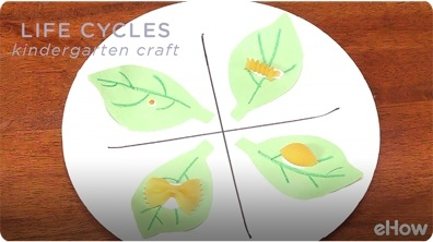 Kindergarten Crafts on Life Cycles
