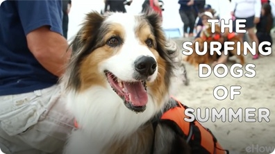 The Surfing Dogs of Summer | American Dog With Victoria Stilwell