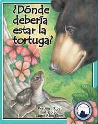 Donde Deberia Estar La Tortuga?