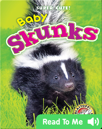 Super Cute! Baby Skunks