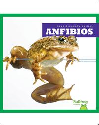 Clasificación Animal: Anfibios