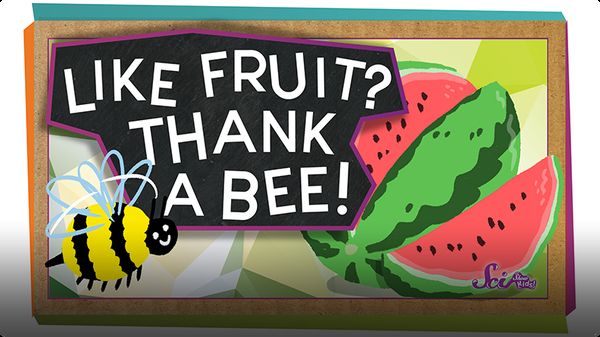 SciShow Kids: Pollination: How Bees Help Make Fruit!
