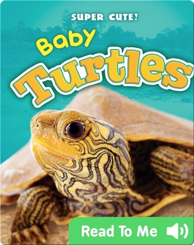 Super Cute! Baby Turtles