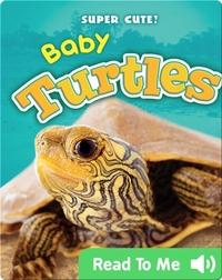 Super Cute! Baby Turtles
