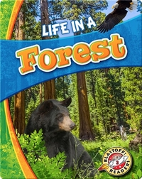 Life in a Forest (Biomes Alive!)