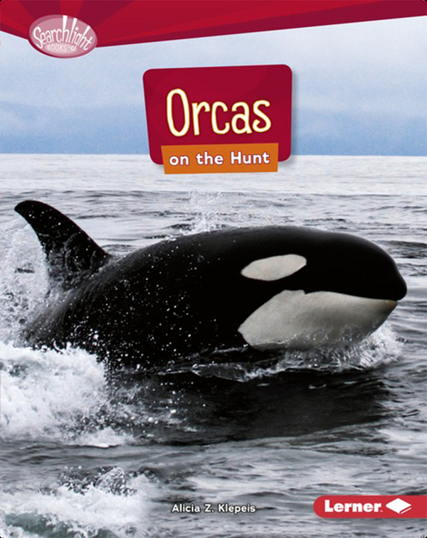 Orcas on the Hunt