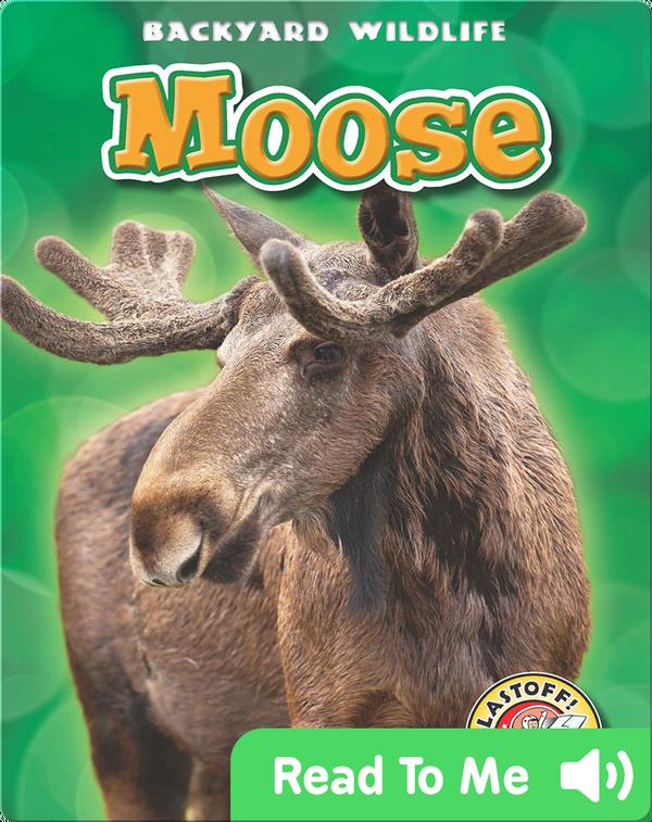 Backyard Wildlife: Moose