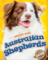 Awesome Dogs: Australian Shepherds