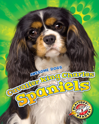 Awesome Dogs: Cavalier King Charles Spaniels