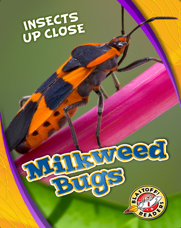 Insects Up Close: Milkweed Bugs