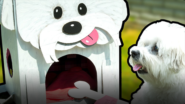 How to Make the Most Amazing Dog House
