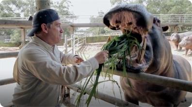 Brady Barr Feeds a Hippo