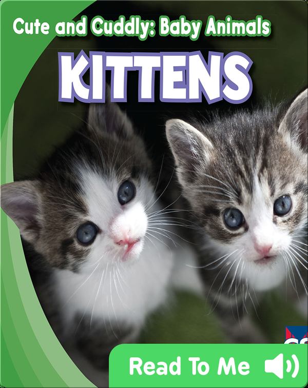 Cute and Cuddly: Kittens
