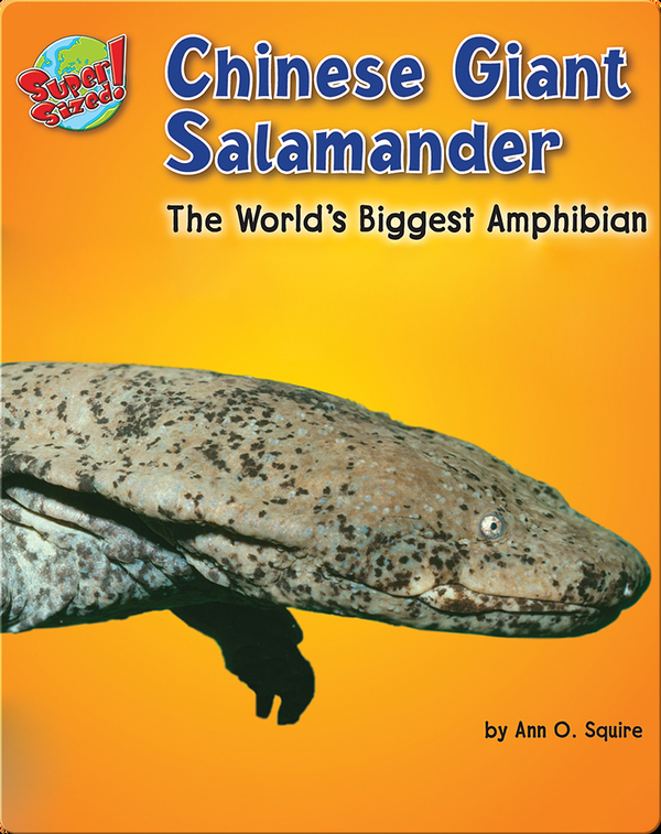 Chinese Giant Salamander: The World's Biggest Amphibian