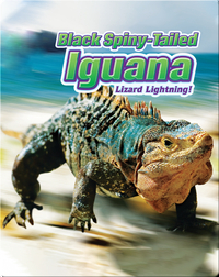 Black Spiny-Tailed Iguana: Lizard Lightning!
