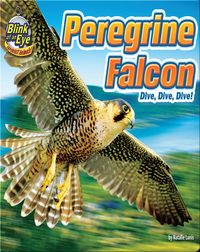 Peregrine Falcon: Dive, Dive, Dive!