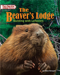 The Beaver's Lodge: Building with Leftovers
