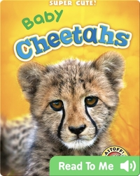Super Cute! Baby Cheetahs