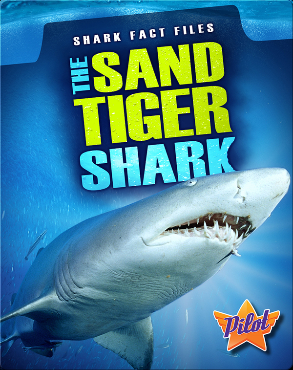 The Sand Tiger Shark