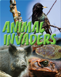 Animal Invaders