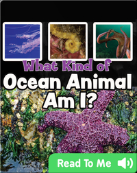What Kind of Ocean Animal Am I?