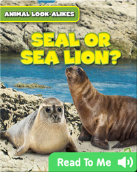 Seal or Sea Lion?