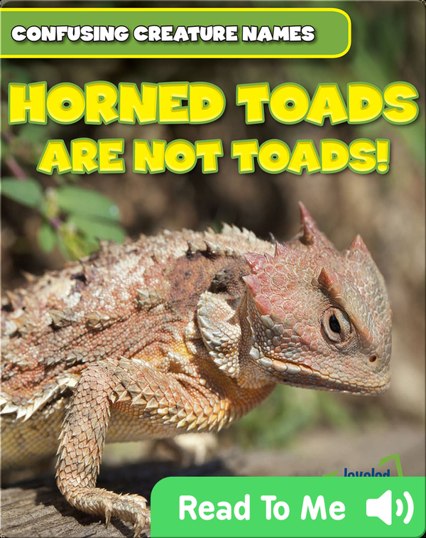 Horned Toads Are Not Toads!