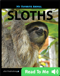 My Favorite Animal: Sloths