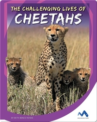 The Challenging Lives of Cheetahs
