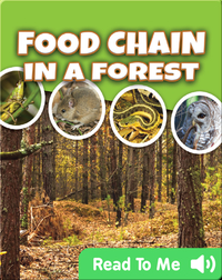 Food Chain In a Forest
