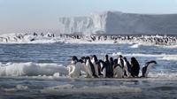 Penguins Swim