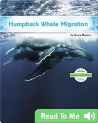 Humpback Whale Migration