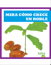 Mira cómo crece un roble (Watch an Oak Tree Grow)