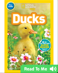 National Geographic Readers: Ducks (Pre-reader)