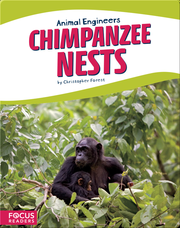 Animal Engineers: Chimpanzee Nests
