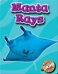 Manta Rays: Oceans Alive